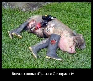 правый-сектор-Украина-боевая-свинья-песочница-1132923